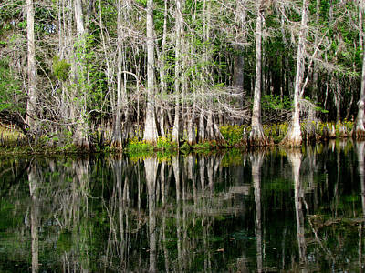Photograph - Cypress Tree Reflections by Judy Wanamaker