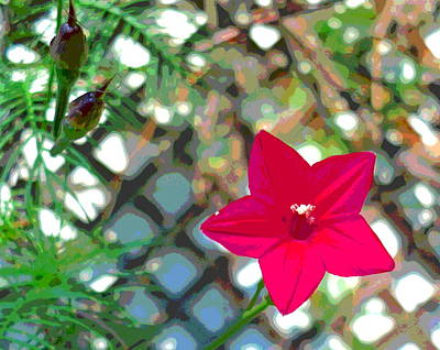 Impressionist Style Photograph - Cypress Vine Blossom And Seed Pods by Padre Art