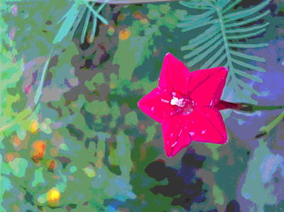 Impressionist Style Photograph - Cypress Vine Blossom by Padre Art