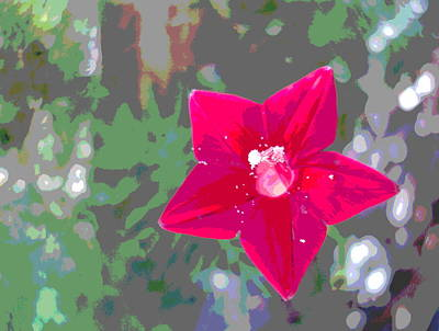 Impressionist Style Photograph - Cypress Vine Blossom With Pollen by Padre Art