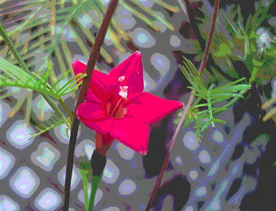 Impressionist Style Photograph - Cypress Vine Flower Leaf And Lattice by Padre Art