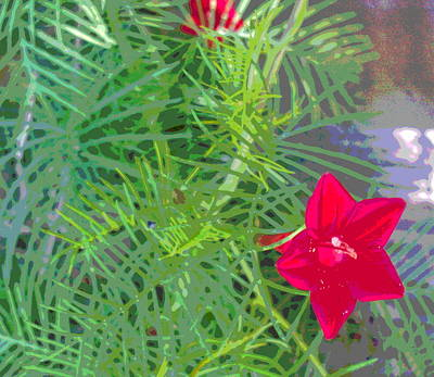 Impressionist Style Photograph - Cypress Vine Foliage With Bloom by Padre Art