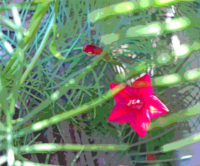 Cypress Vine With Foliage Art Print by Padre Art