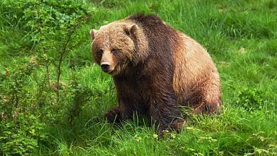 Northwest Territories Photograph - Da Bear by Naman Imagery