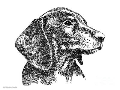 Drawing - Dachshund-drawing-2 by Gordon Punt