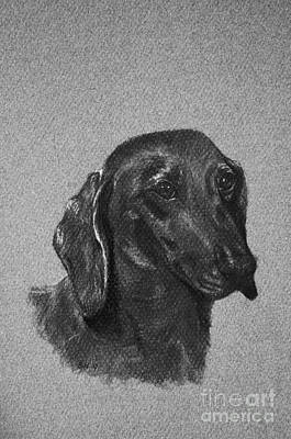 Drawing - Dachshund by Susan Herber
