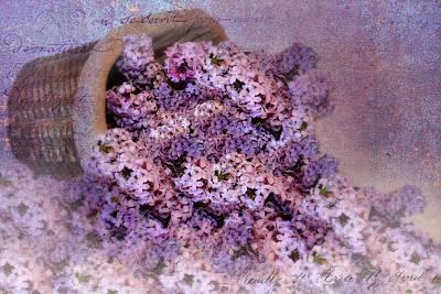 Daddy's Lilacs Series II Art Print by Kathy Jennings