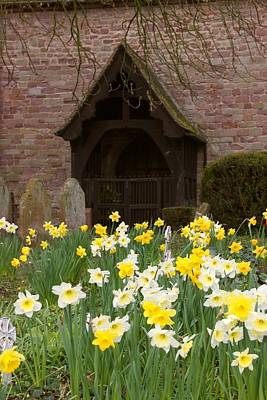 Photograph - Daffodil Church by Ed Lukas