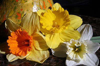 Photograph - Daffodil Threesome by Kay Novy