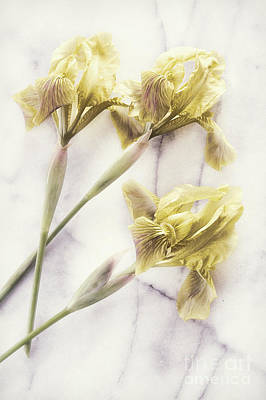 Daffodils Photograph - Daffodils by HD Connelly