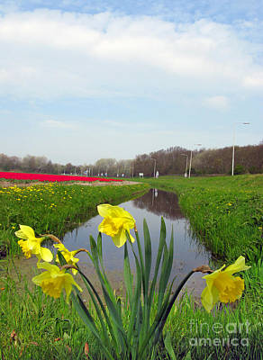 Photograph - Daffodils In Holland 02 by Ausra Huntington nee Paulauskaite