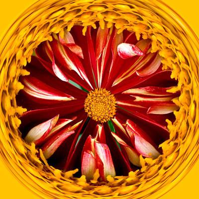 Photograph - Dahlia Circle by Jean Noren