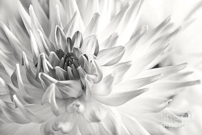 Warm Color Photograph - Dahlia Flower 02 by Nailia Schwarz