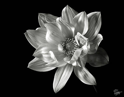 Photograph - Dahlia In Black And White by Endre Balogh
