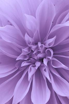 Amature Photograph - Dahlia In Purple by Bruce Bley
