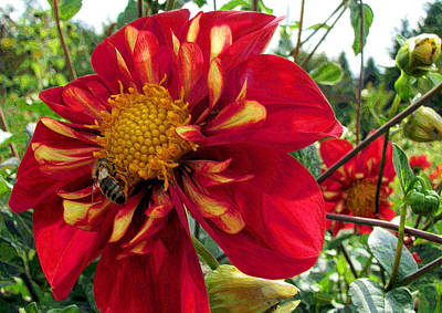 Photograph - Dahlia Make My Day by Lora Fisher