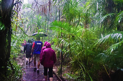 Photograph - Daintree National Park Rain Forest Hike by Harry Strharsky