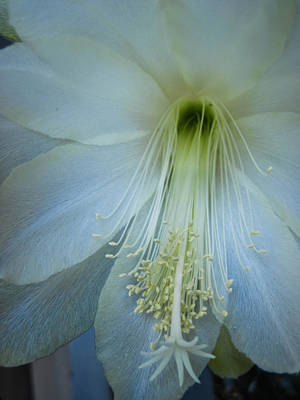 Photograph - Dainty Beauty by Cheryl Perin