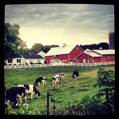 Photograph - Dairy Farm by Lora Mercado