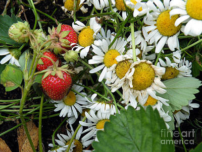 Daisies And Strawberries Art Print by Vicky Tarcau
