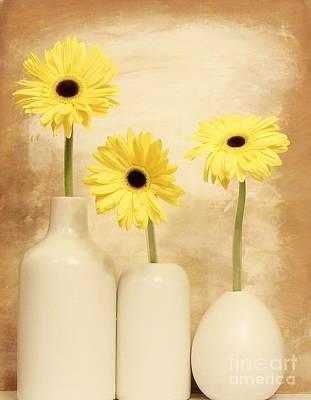 Daisies In A Row Print by Marsha Heiken