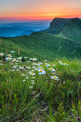 Bulgaria Photograph - Daisies In The Mountyain by Evgeni Dinev