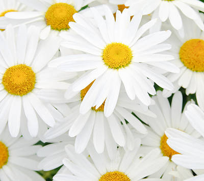 Daisy Background Art Print