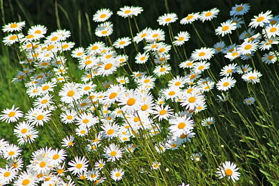 Daisy Day's Art Print by Karen Grist