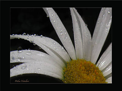 Artist Debra Vatalaro Mixed Media - Daisy Drops by Debra     Vatalaro