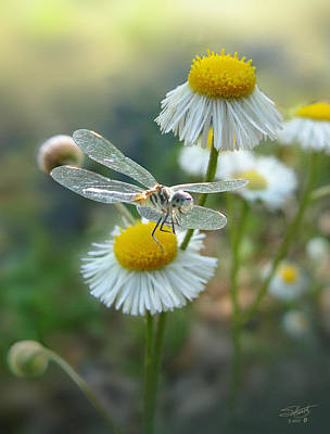 Photograph - Daisy Fleabane And Dragonfly by IM Spadecaller
