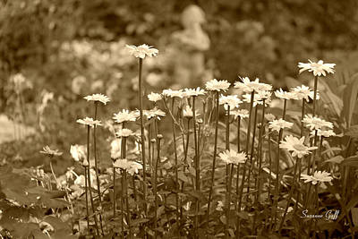 Photograph - Daisy Garden In Sepia by Suzanne Gaff