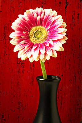Daisy In Black Vase Print by Garry Gay