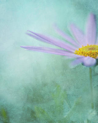 Daisy In Mist Art Print by Sharon Lapkin