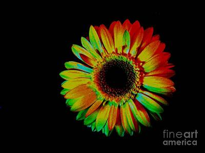Histogram Photograph - Daisy In Multicolor by Marsha Heiken