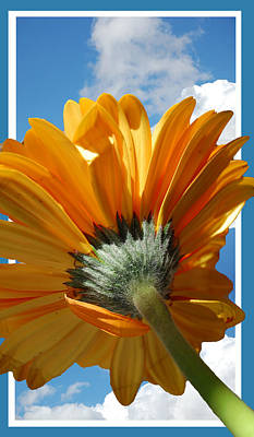 Yellow Daisy Wall Art - Photograph - Daisy In The Sky by Rozalia Toth