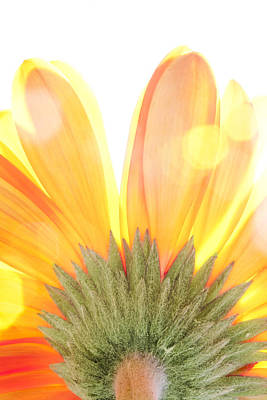 Photograph - Daisy In The Sun by Al Hurley