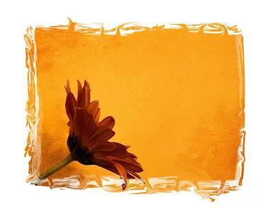 Burnt Digital Art - Daisy In The Yellow Corner by Marsha Heiken