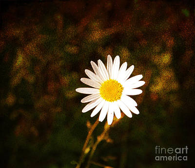 Daisy Is Single But Not Lonely  Art Print