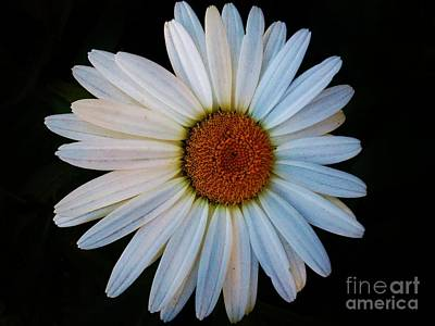 Art Print featuring the photograph Daisy by Jasna Gopic