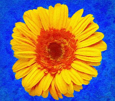 Gerbera Drawing - Daisy by Jeffrey Kolker