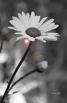 Blooming Digital Art - Daisy Lens Flare by Suzanne Gaff