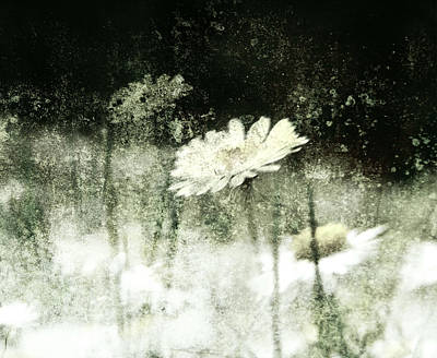 Photograph - Daisy Love by Florin Birjoveanu