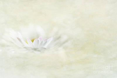 Photograph - Daisy by Marion Galt