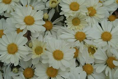 Photograph - Daisy by Ralph Jones