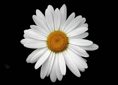 Photograph - Daisy by Scott Brown