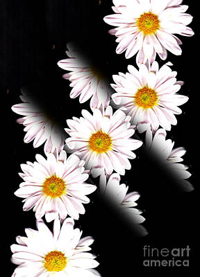 Photograph - Daisy Split by Traci Cottingham