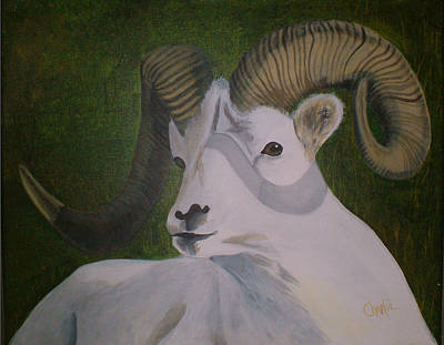 Charlie Brown Painting - Dall Sheep   by Charlie Brown