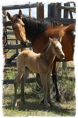 Photograph - Dam And Foal by Judy Deist