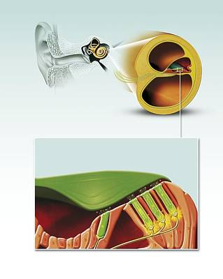 Damaged Hearing, Artwork Art Print