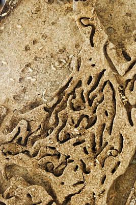 Maze Lava Photograph - Damaged Timber Termite Infestation by Kantilal Patel